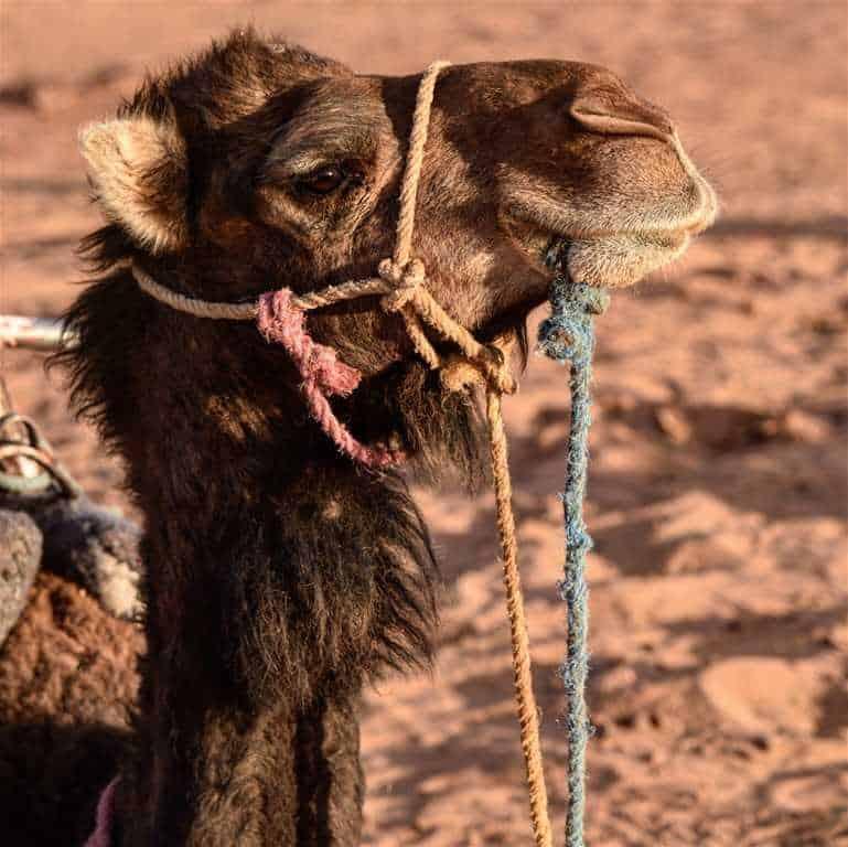 Essaouira, désert d'Erg Chegaga, montagnes de l'Atlas (6 jours)