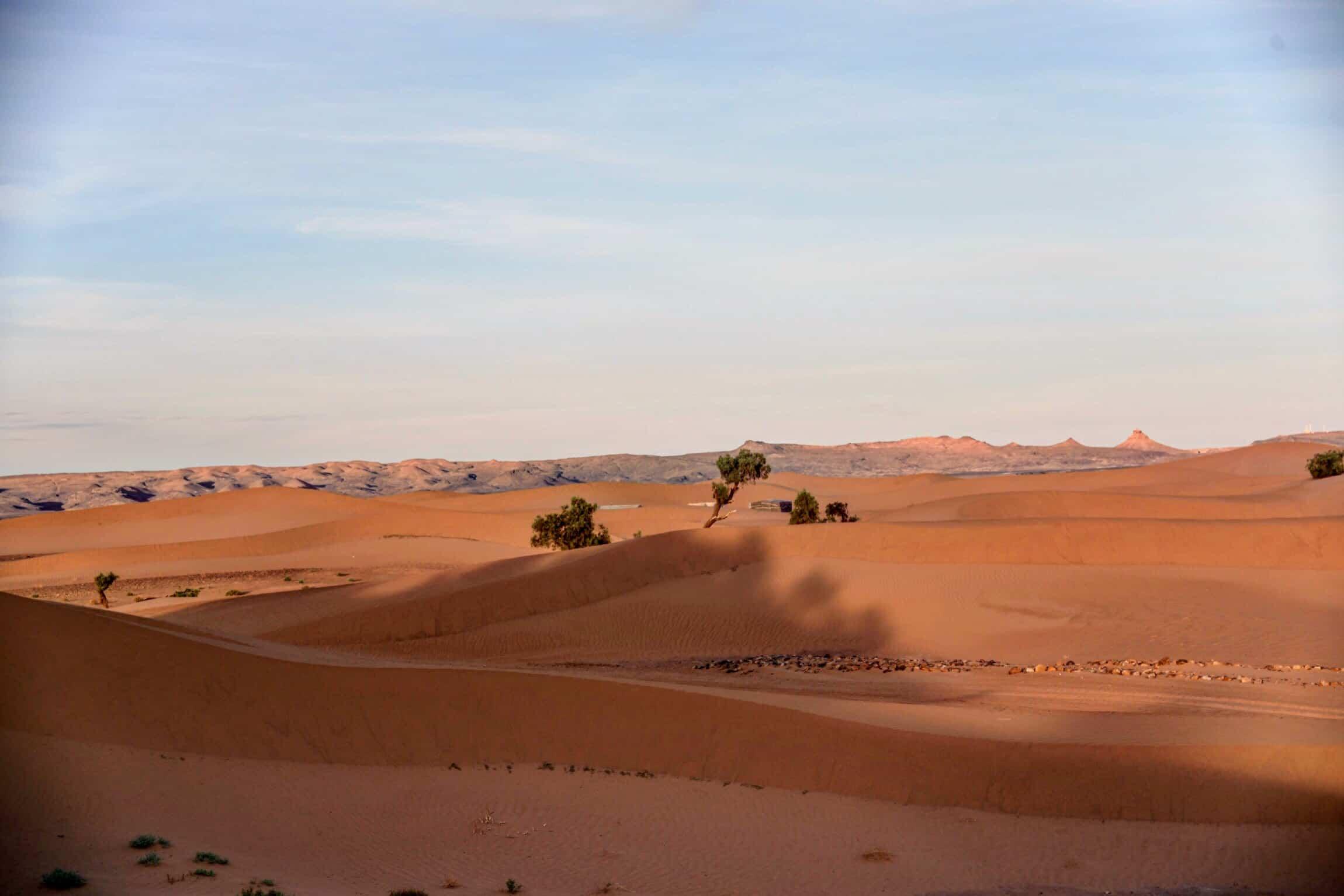 Une petite majesté dans les dunes de Zagora (2 jours)