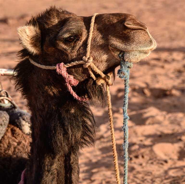 Atlantik, Sahara, Hohe Atlas Berge – 7 Tage
