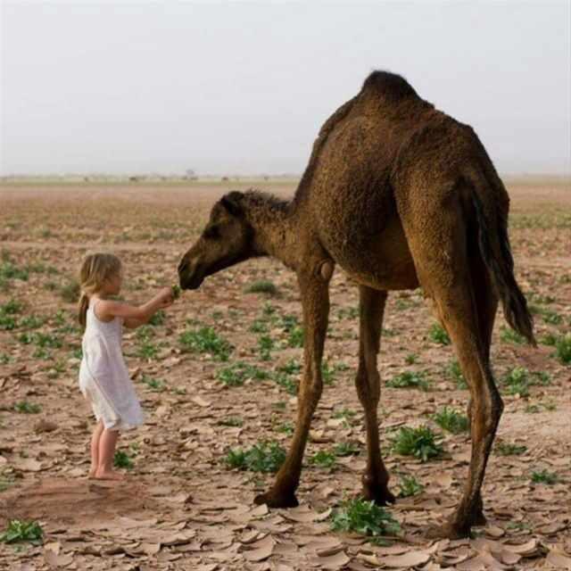 Dadesschluchten, herrliche Erg Chebbidünen, Agadir – 4 Tage