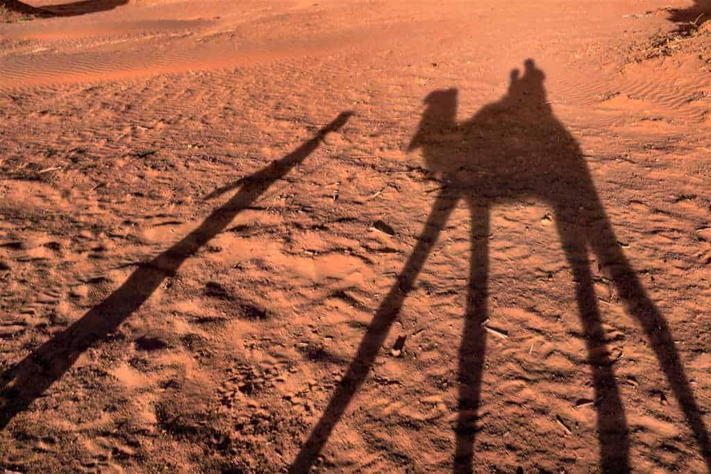 camel-silhouette-desert-trip